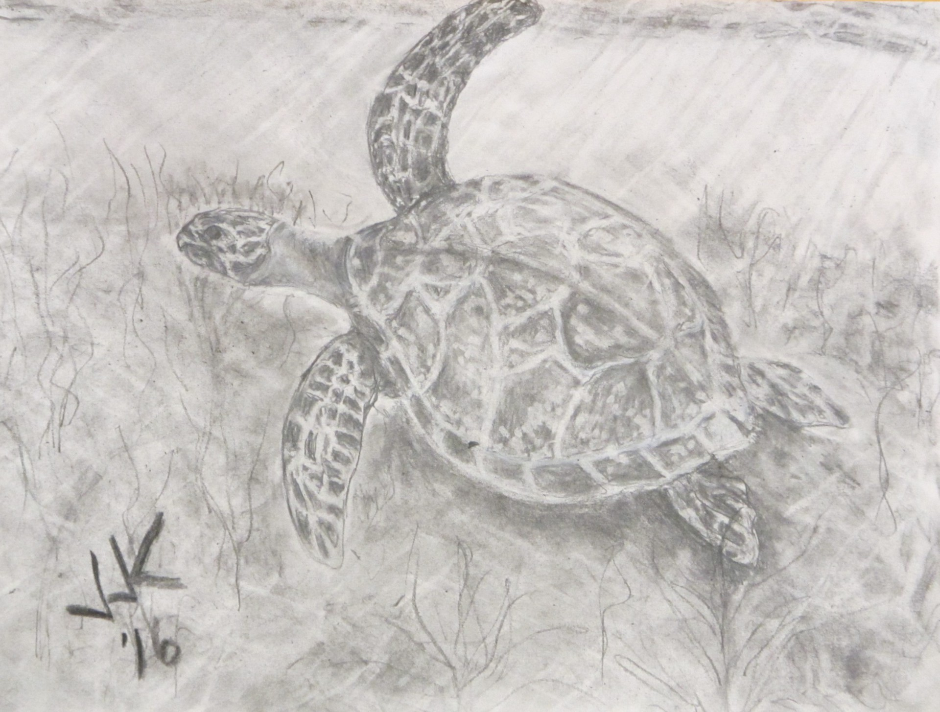 Pencil drawing of a sea turtle under water.