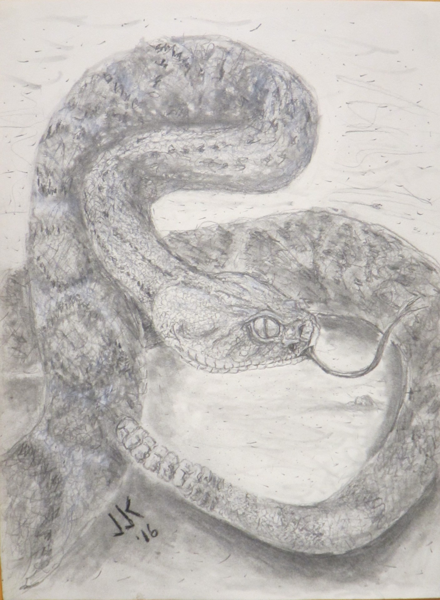 Pencil drawing of a western diamondback rattlesnake ready to strike.