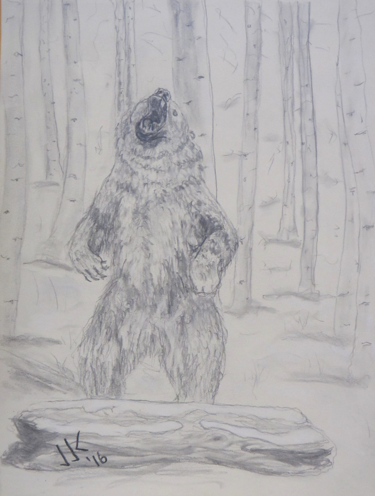 Pencil drawing of a grizzly bear in the woods growling and rising on its hind legs.