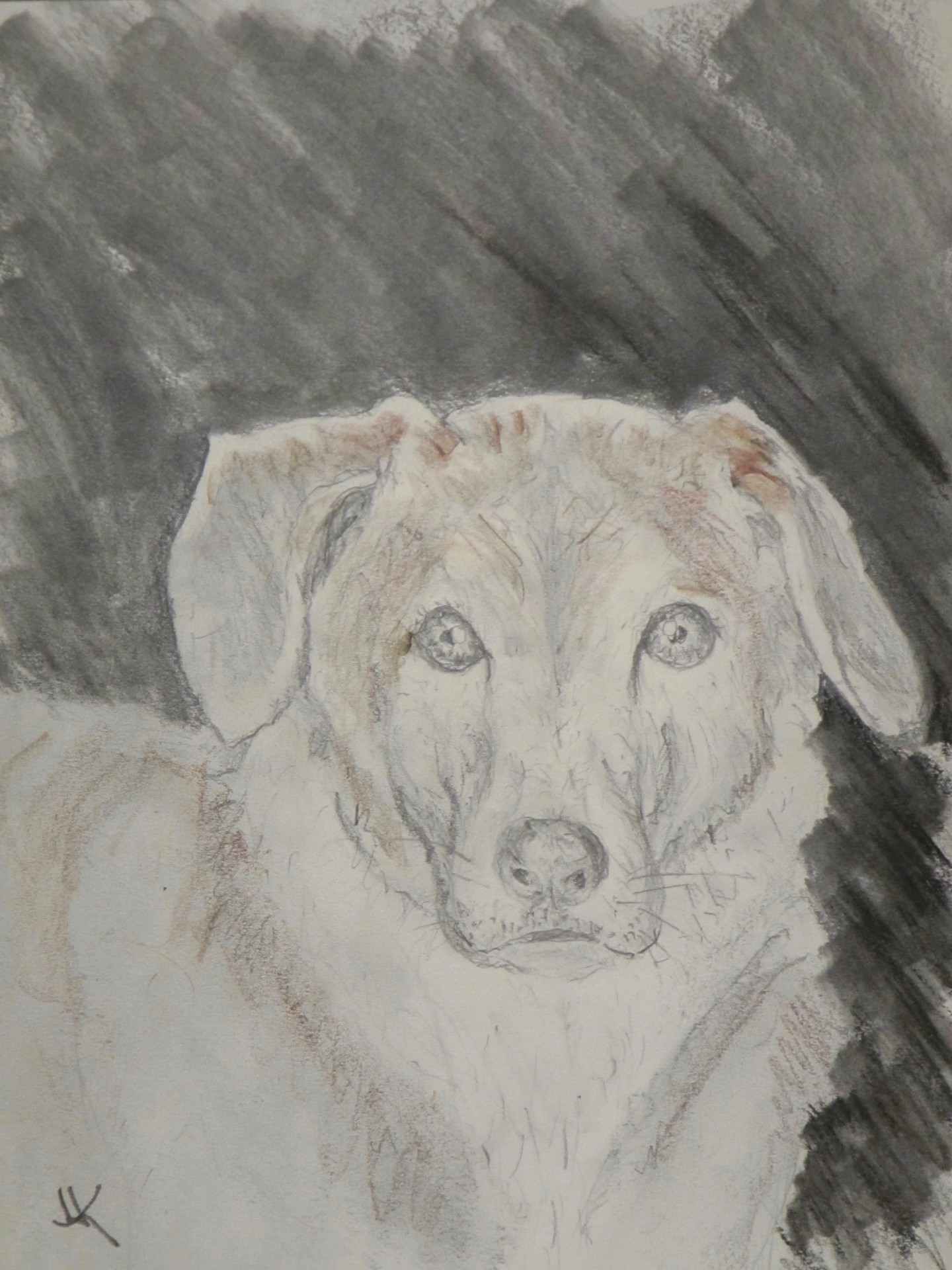 Pencil drawing of the head and shoulders of a very sweet dog.