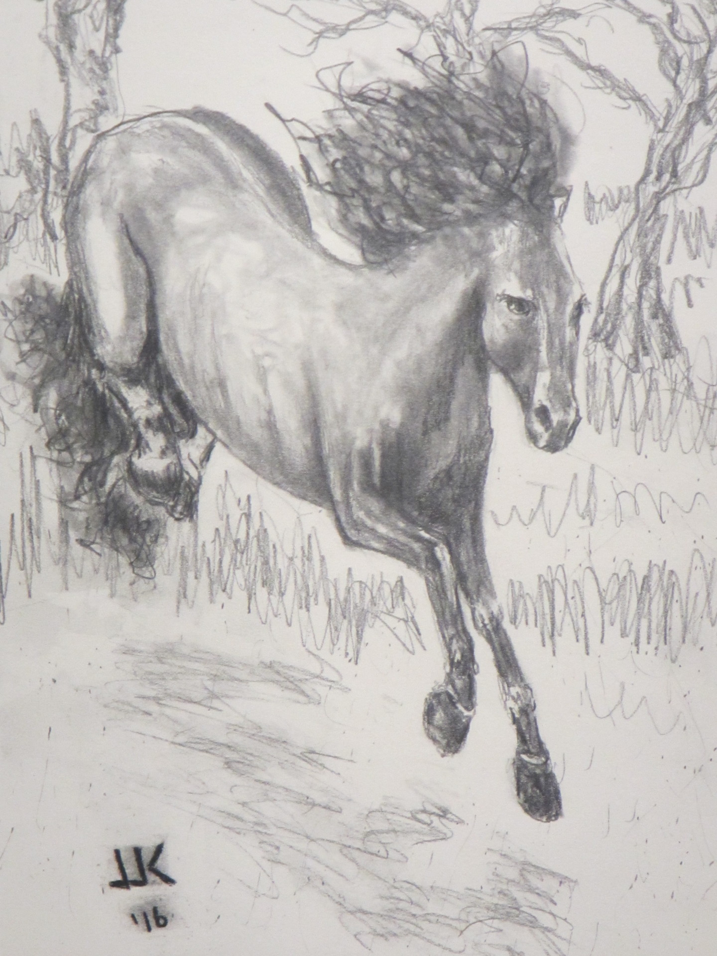 Pencil drawing of a horse bucking.