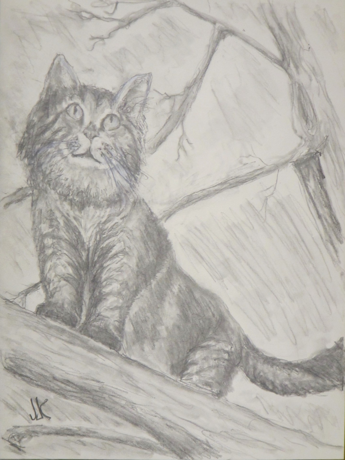 Pencil drawing of a cat hunting in a tree.
