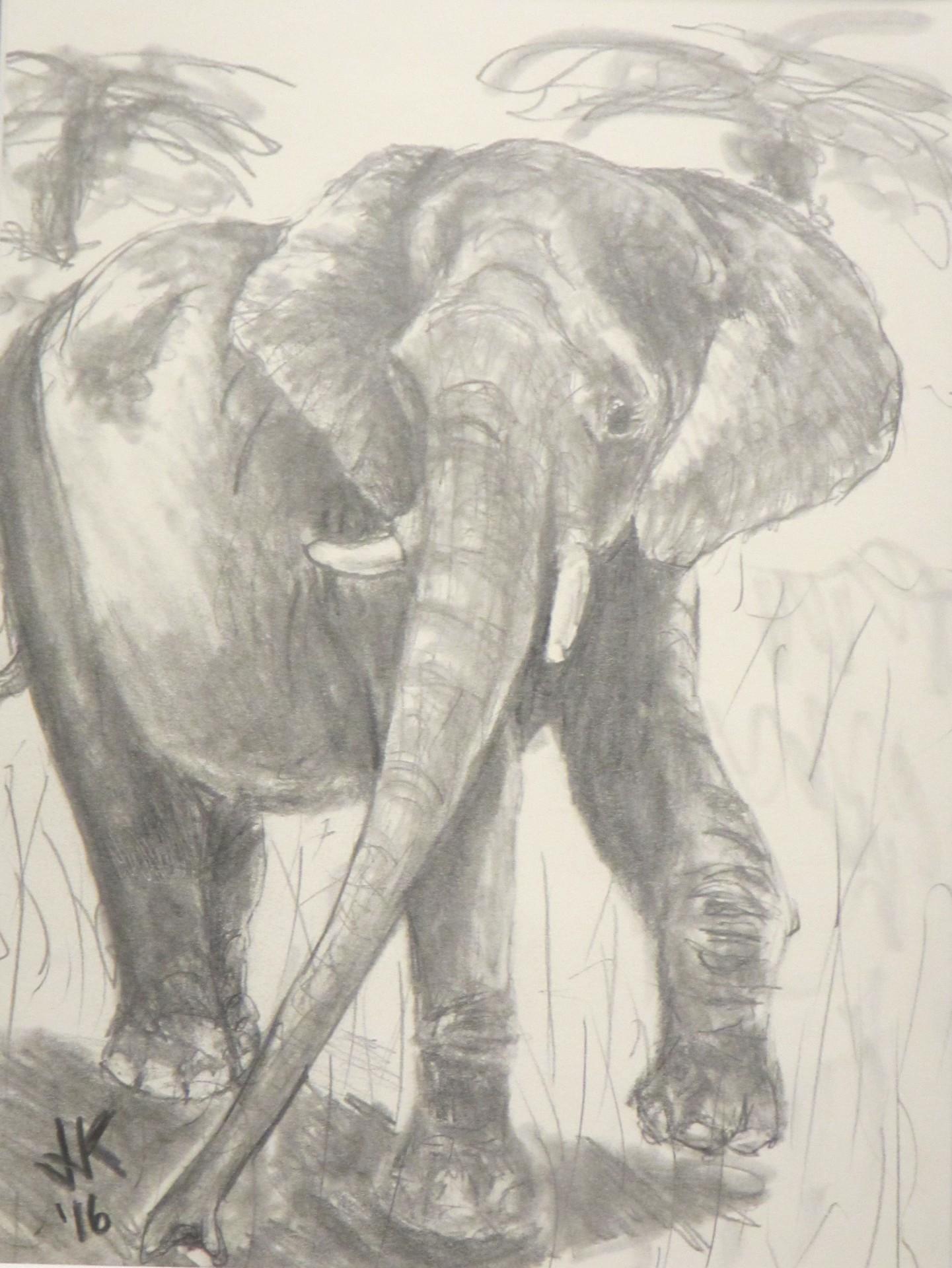 A bull elephant.