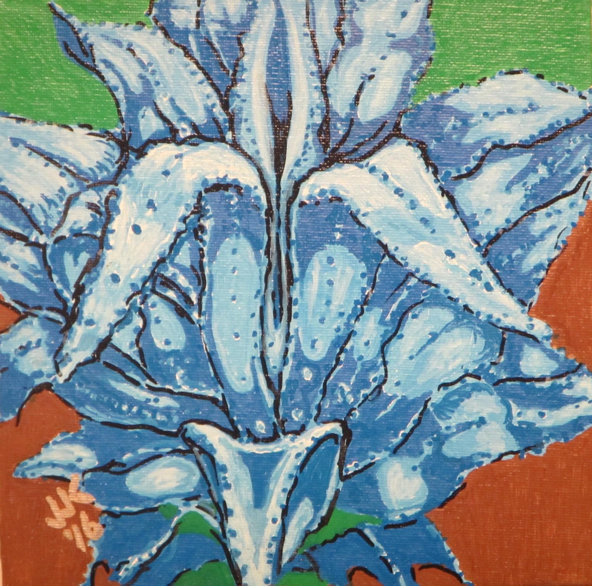 Blue Agave cactus.