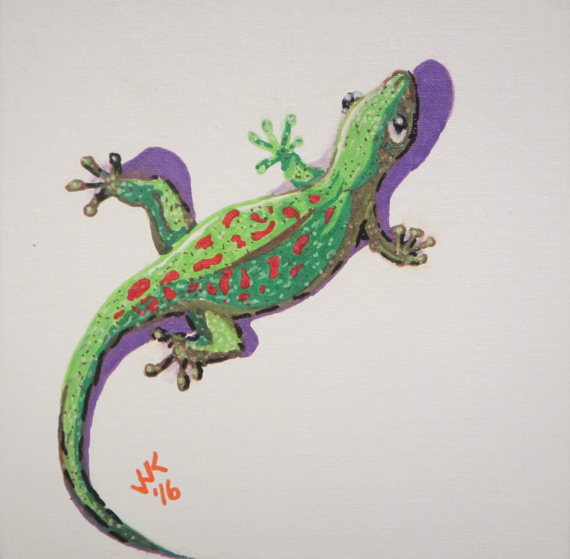A gecko on the wall.