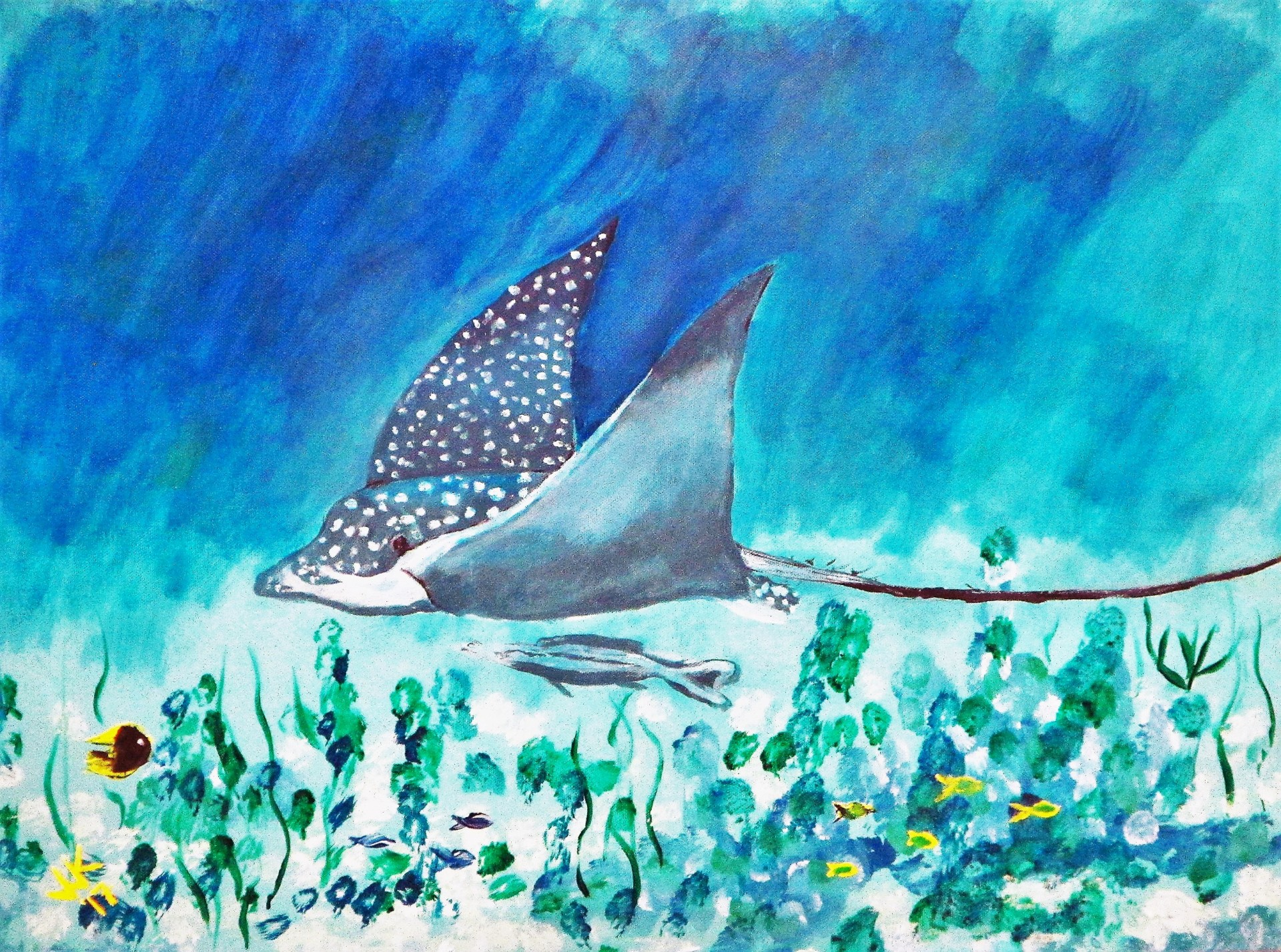 A spotted eagle ray at Silk Caye.