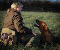 Fox Red Labrador training