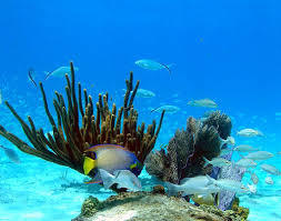Bimini's Natural Reefs