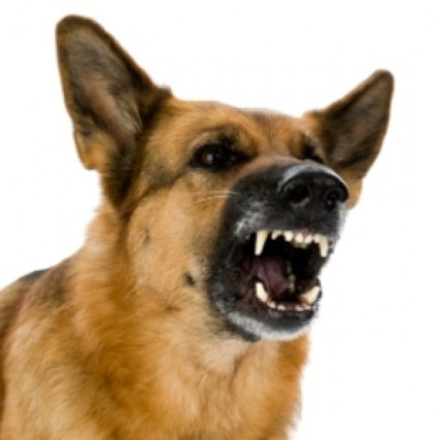 Attack dogs set on HNZ meth tester