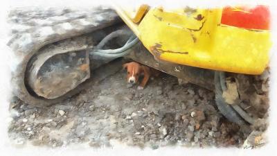 Puppy Under Tractor