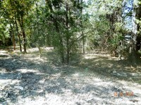 FORESTRY MULCHING, UNDER BRUSHING, PROPERTY CLEARING, DEW TEXAS