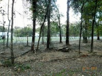 FORESTRY MULCHING, UNDER BRUSHING, PROPERTY CLEARING