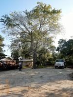 TREE SERVICE, TREE REMOVAL, DEAD TREE