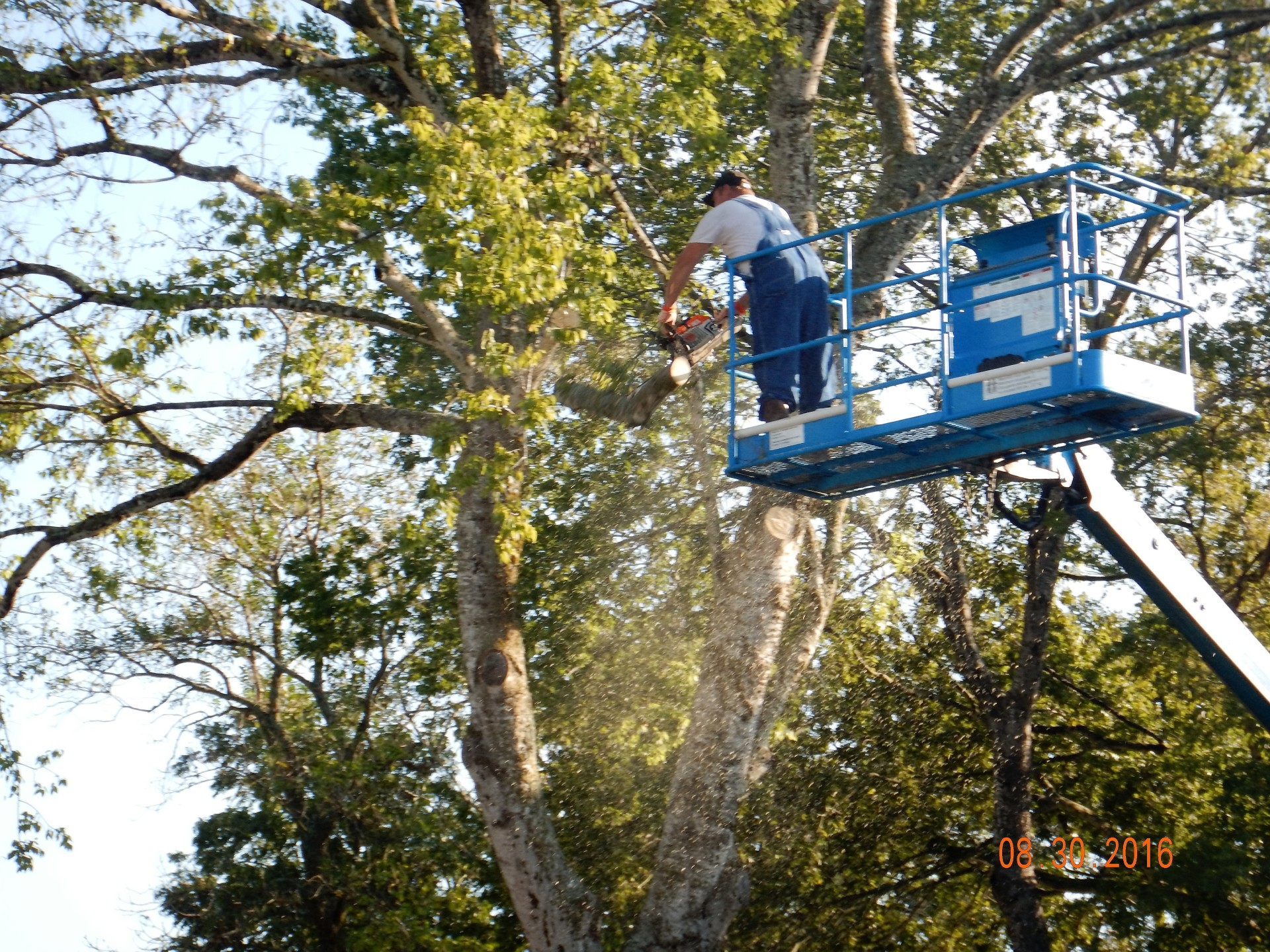 TREE REMOVAL, TREE TRIMMING, DMA TREE SERVICE
