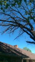 MASSIVE TREE REMOVAL FROM OVER HOUSE, FAIRFIELD TEXAS