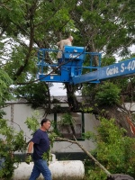 CHINA BERRY TREE ON ROOF, MASSIVE TREE, TREE REMOVAL, DEW TEXAS