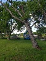 TREE REMOVAL, TREE SPLITTING, DEAD TREE, Fairfield Texas