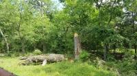 Tree Removal, Fairfield Texas, Dead Tree, Stump Removal/Grinding, FAIRFIELD TEXAS