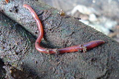 Nature, Numbness, and Earthworms