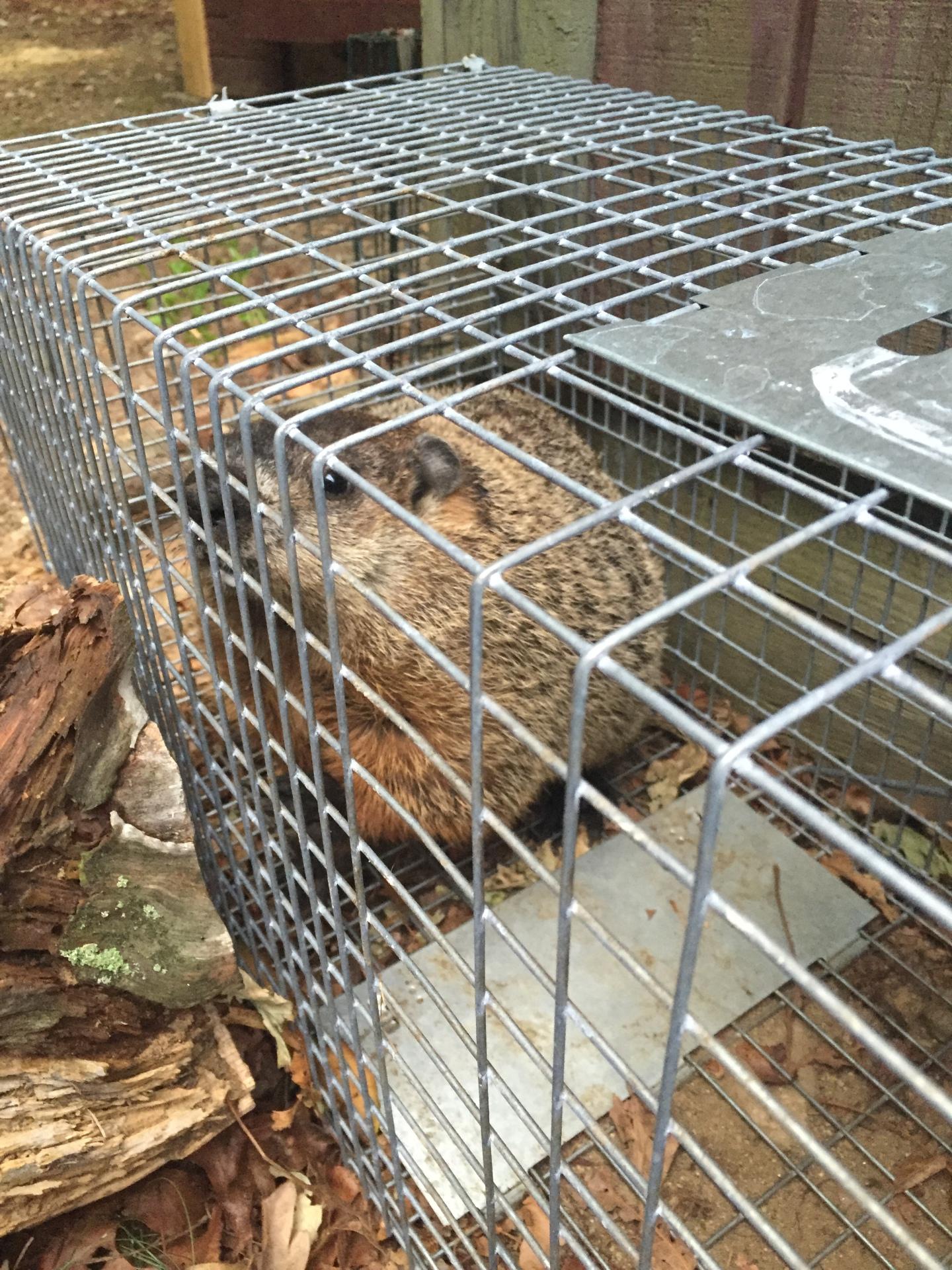Ground hog removal