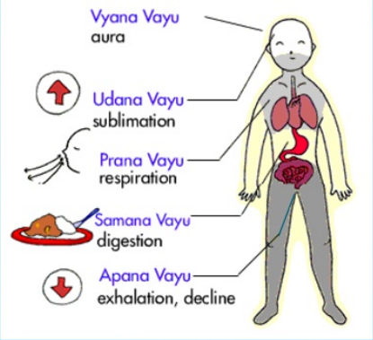 Main five airs(vayu) within our body