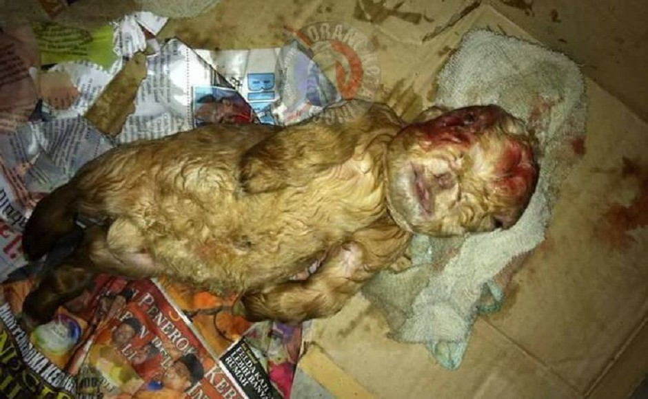 Malaysia: Netizens astonished by birth of human-faced goat
