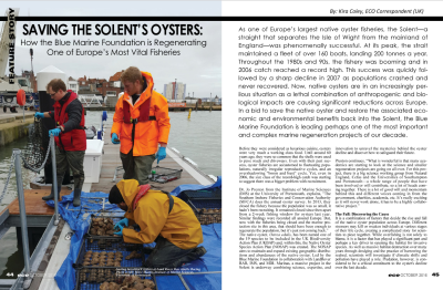 Saving the Solent's Oyster