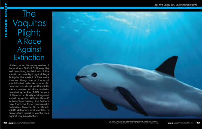 The Vaquitas Plight: A Race Against Extinction