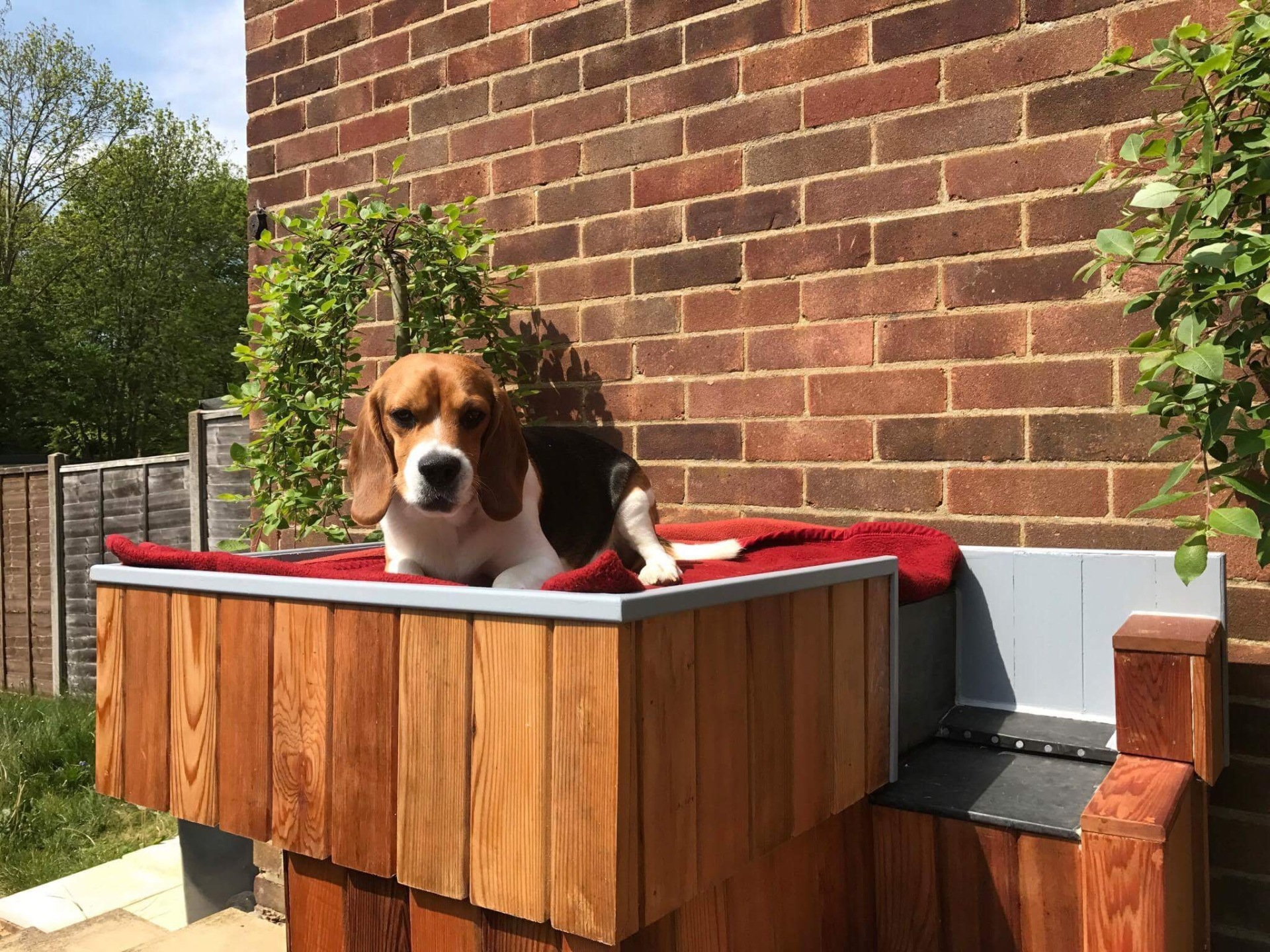 TOBIA IN HIS NEW BESPOKE CONTEMPORARY KENNEL