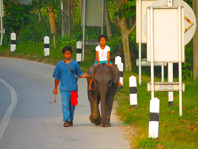 ride the elephant to the beach