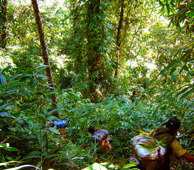 mountain jungle trek