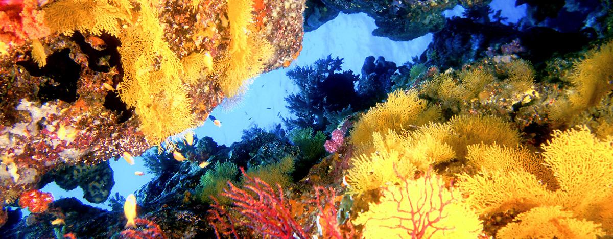 fascinating scuba diving