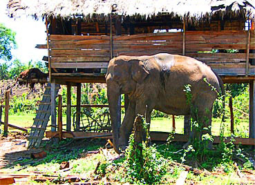 Mountain Elephant