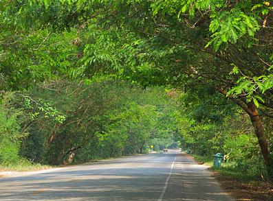 Road travel in Surat Thani