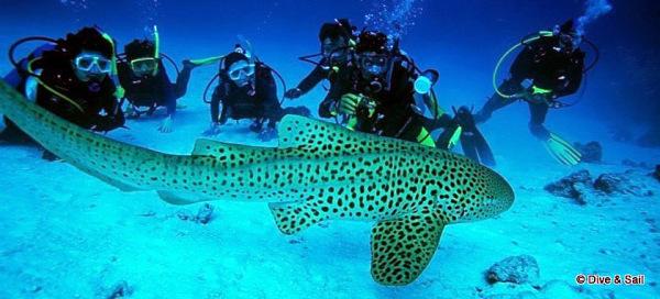 diving in the Myeik archipelago