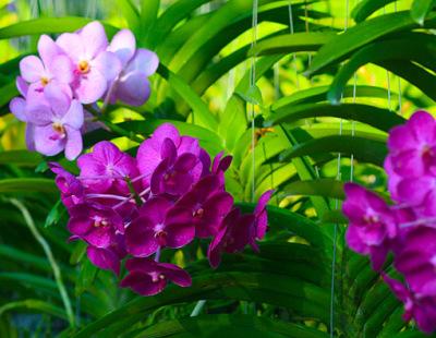 colorful orchid plants