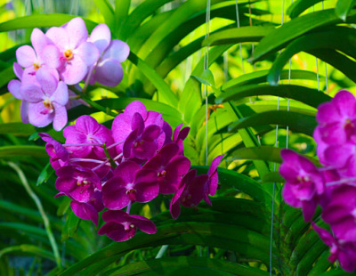 colorful orchid plants