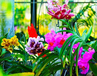 a orchid bouquet