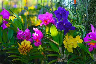 colorful exotic plants