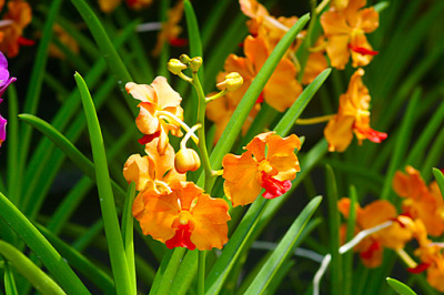 beautiful flower colors