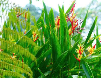 exotic plants around the house