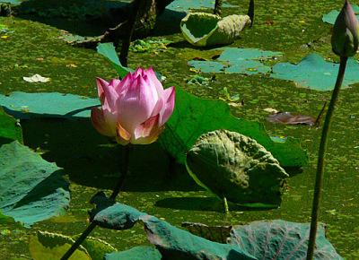 Bokor National Park Flowers