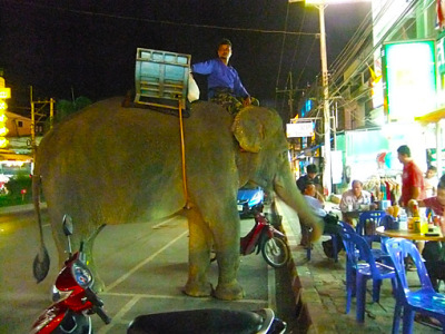 a little elephant spectacle