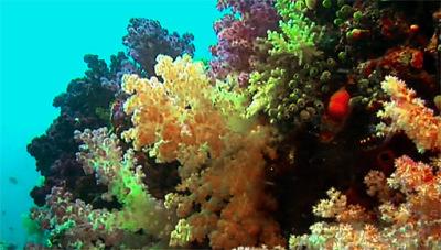 raja ampat islands (7)