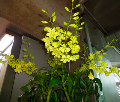 orchids around the corner