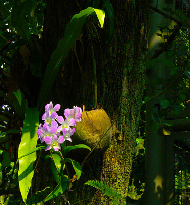 colorful dendrobium orchids in the park