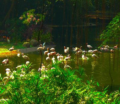 Jurong Bird Park and wader