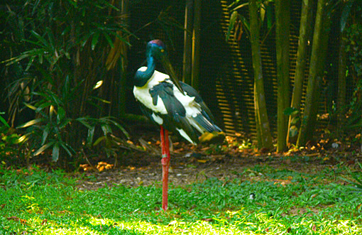 Beautiful bird in the Singapore park