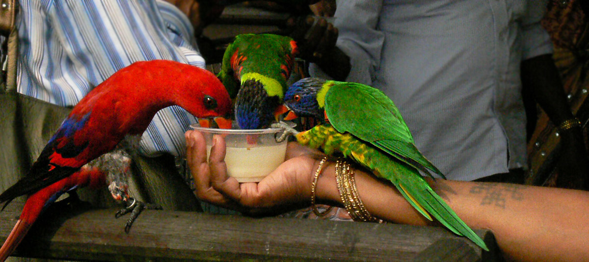 Hungry birds in the Aviary