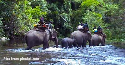 Umphang elephant trek